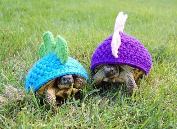 Tortoise Jackets