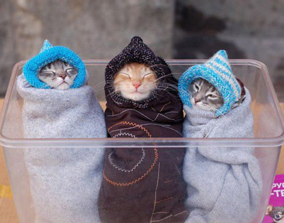 Cats wrapped up