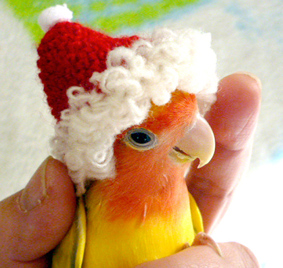 Bird Santa hat
