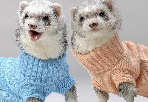 Ferret Sweaters