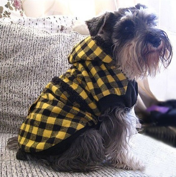 Dog wearing jacket
