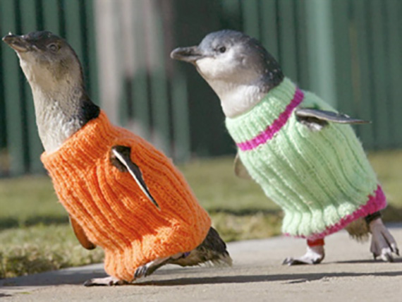 Penguin Sweaters