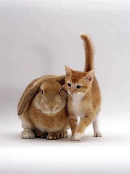 bunny and cat
