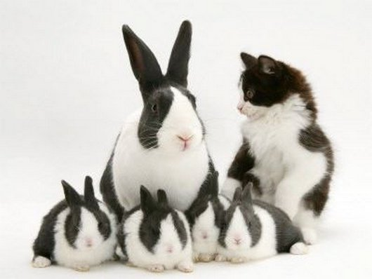 cat and bunnies