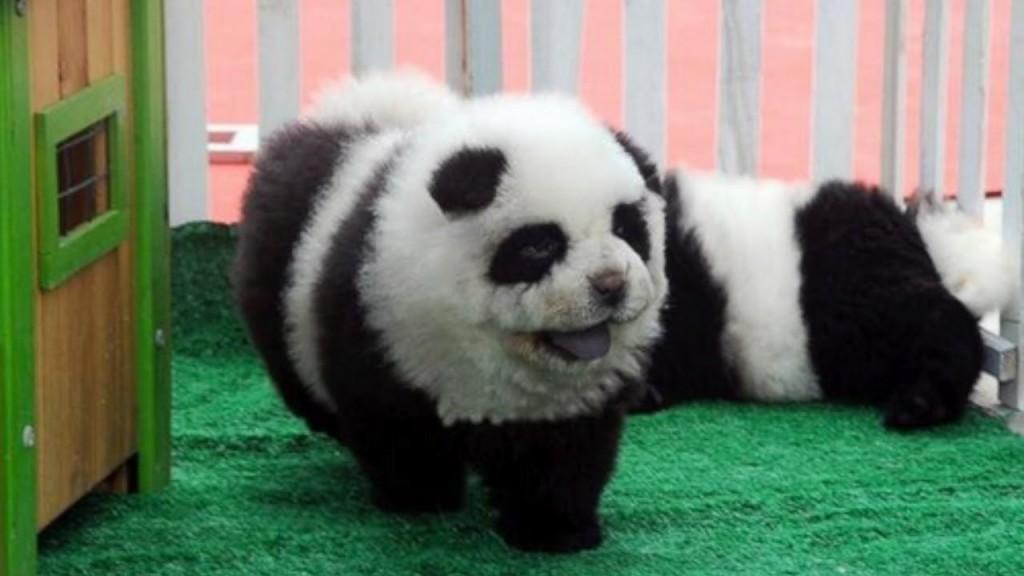 panda dogs2
