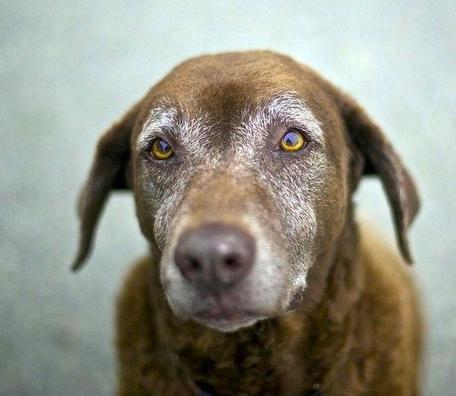 Senior Dogs are STILL Cute & Lovable