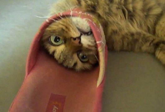 cat stuck in flip flop
