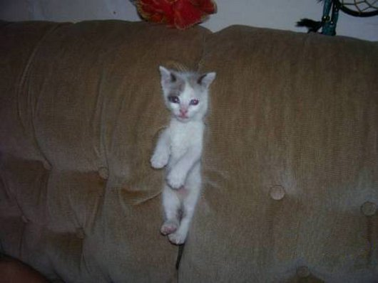 Cat stuck in couch
