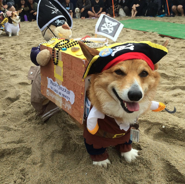 Is he trying to mimic Captain Jack Sparrow? Hmm.. you look much cuter than Captain!