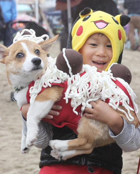 This cutie is dressed up as spaghetti and meatballs.