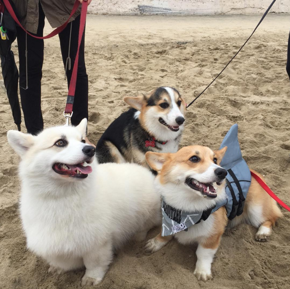 LOL! That little one may frighten everybody. He plays as the shark that ruins the beach party.