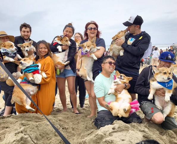 Corgi Day at the Beach