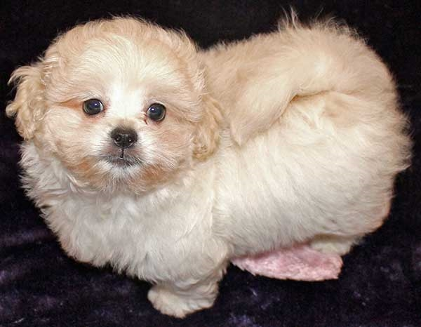 7 Of The Most Popular And Cutest Mixed Breed Dogs