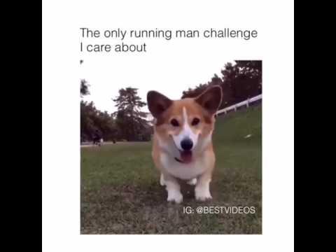 Running Man Dog