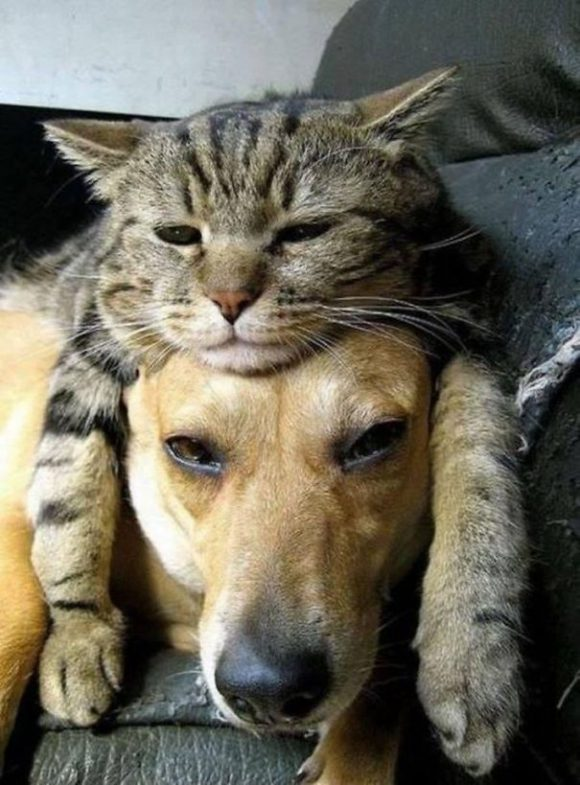 cat sleeping on dog