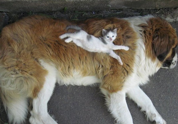 cats sleeping on dog