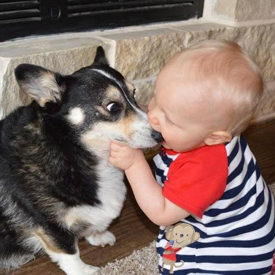 Kid biting a dog