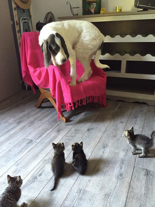 Dog scared of kittens