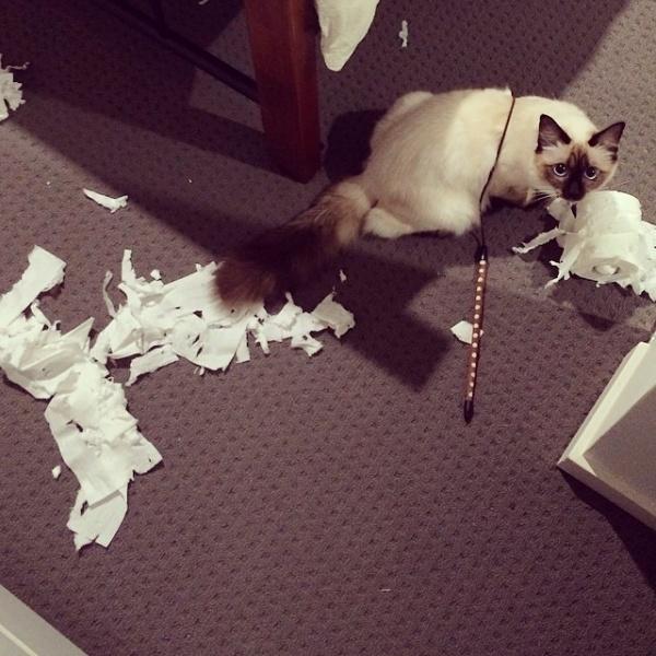 Cat tissue mess