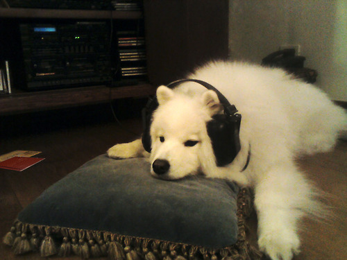 Dog Chilling With Headphones