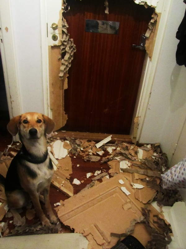 Dog ruined door