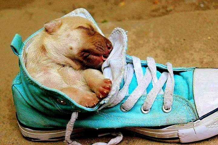 Dogs inside shoes