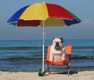 bulldog-sun