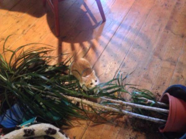 cat plant mess