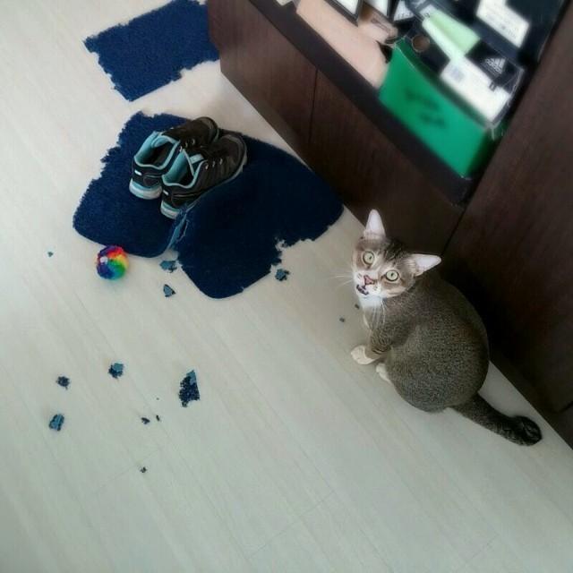 Cat floor mat mess
