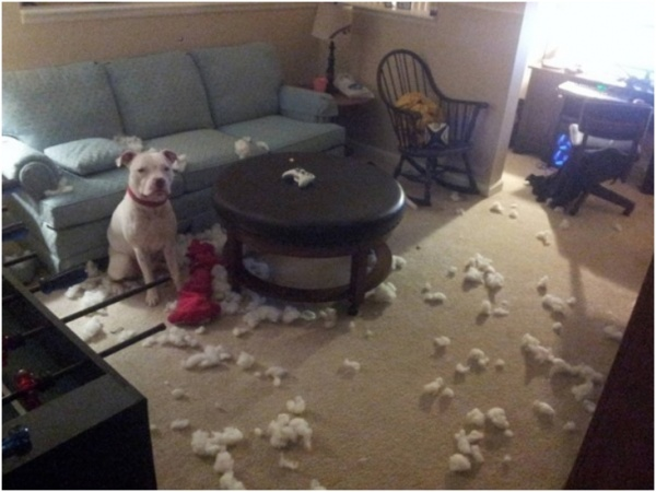 dog with cotton all over