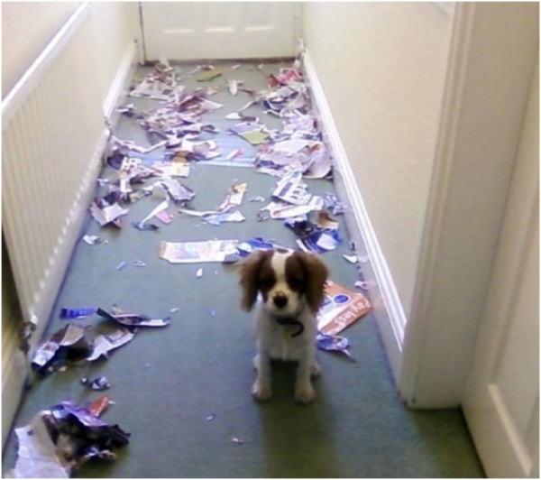 puppy ruined papers