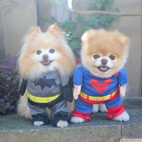 Batdog vs Superdog