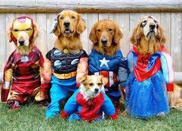 Avengers Dog