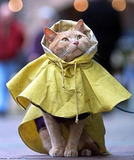 cat in raincoat