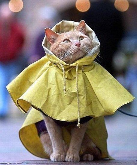 cat in raincoat