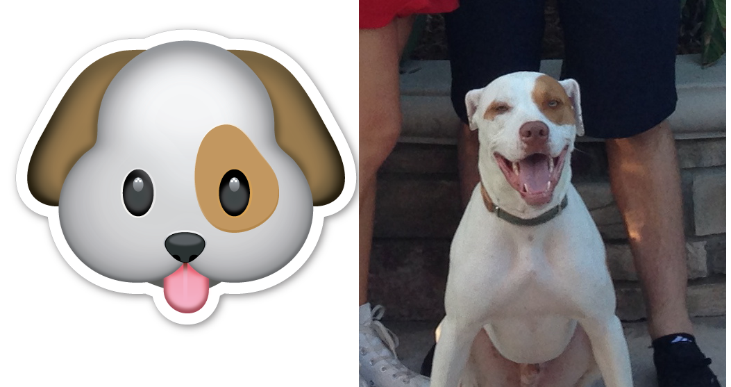 Cute Looking Pets As Emoji Cuteness Overflow