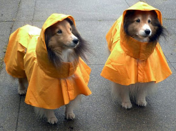 dogs in raincoats