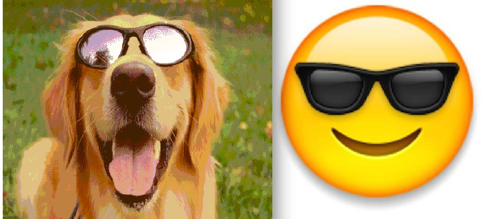 shades dog
