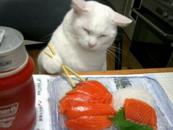 cat eating salmon