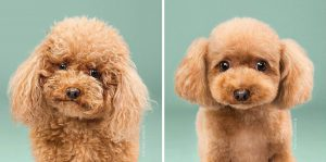 cute dog hairstyle