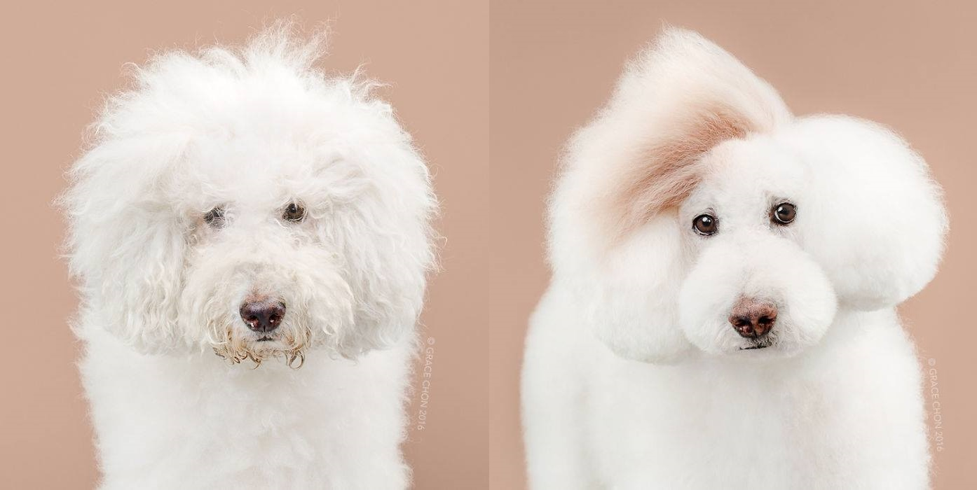 cute hairstyle for dog