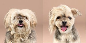 one side hairstyle dog