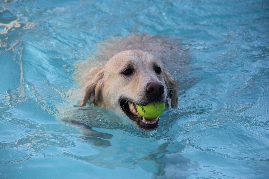playing while swimming