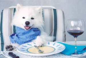 puppy ready for fine dining