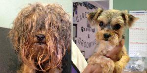 shelter dog needs makeover