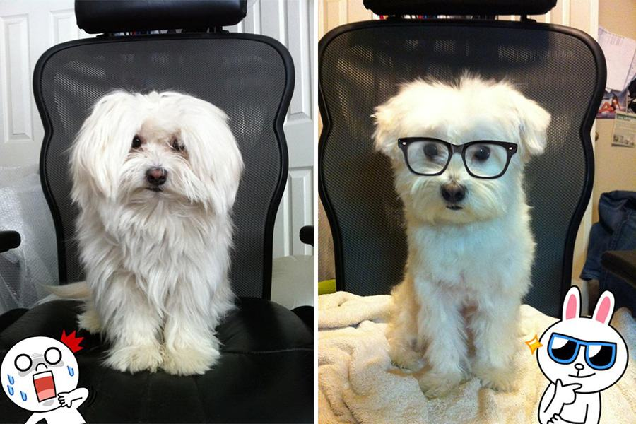 smart dog haircut