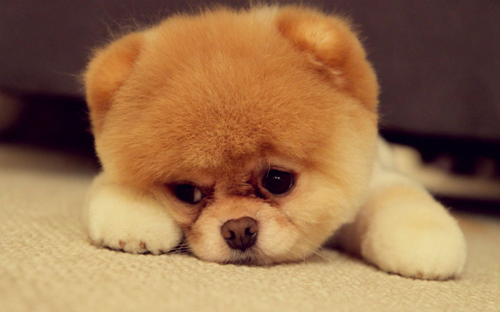 cute sad puppy