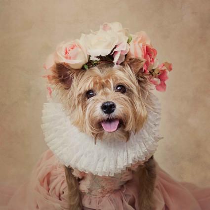 Dog in girly costume