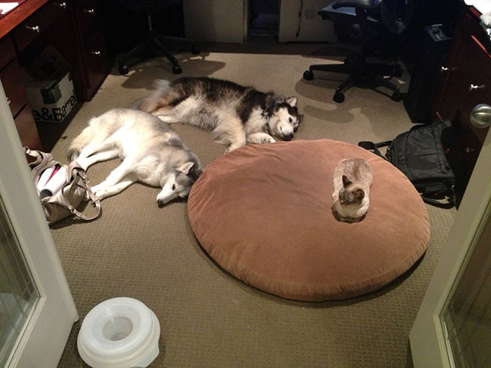 dogs-sleep-outside-their-bed