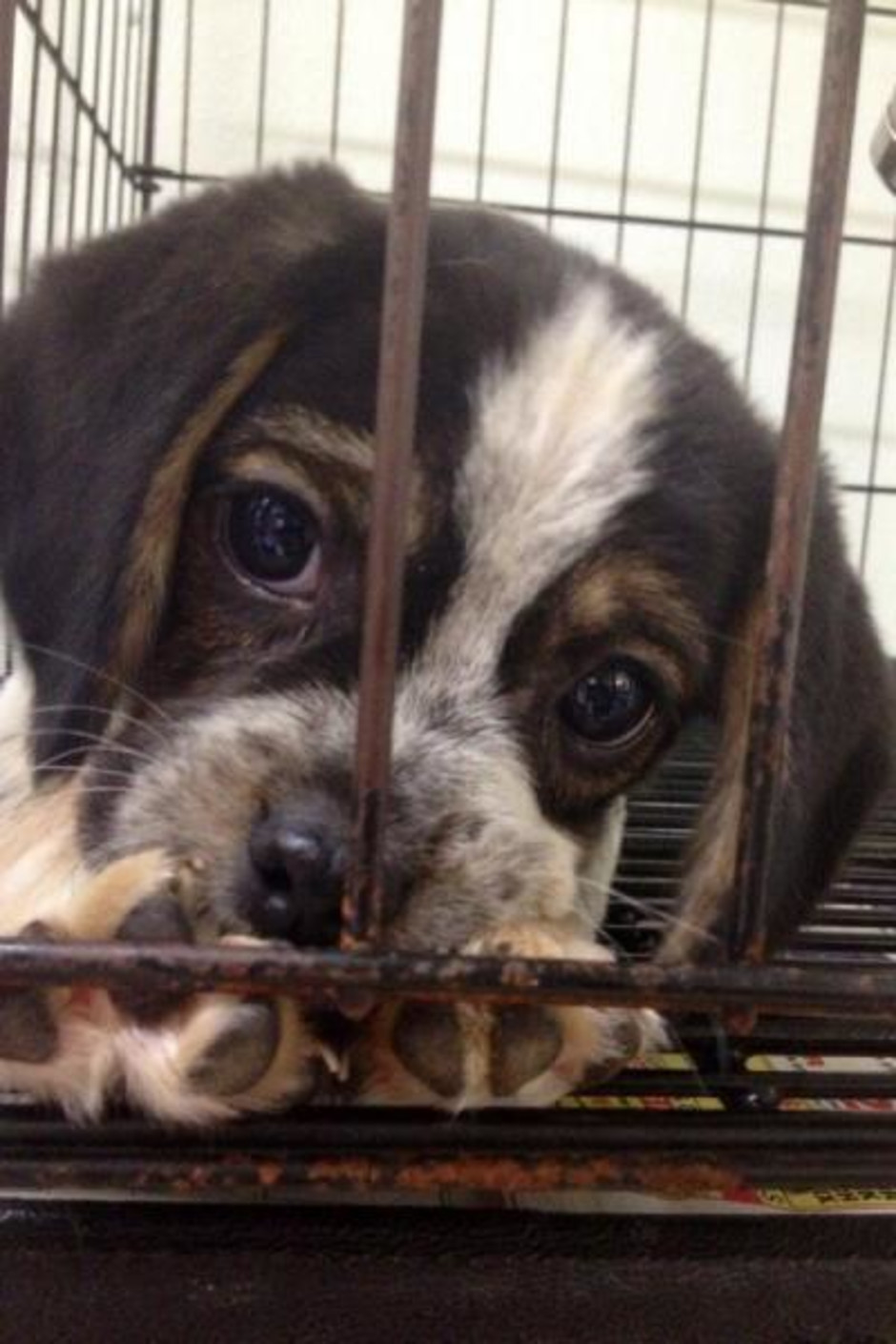 Puppy Eyes in the cage